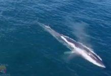 Avistamiento de ballena en Antofagasta