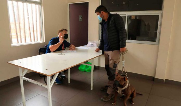 Chipeo de perros | Foto: Prensa I.M.A.